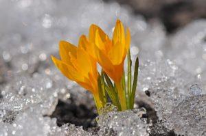 Весна — Чудесный Период!